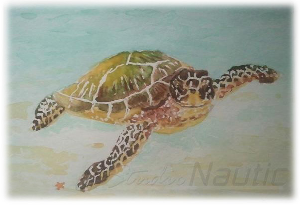 Watercolor, Sealife Series